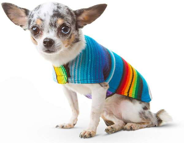 Evcil Hayvanlara Kıyafet Giydirmek Doğru Mu?