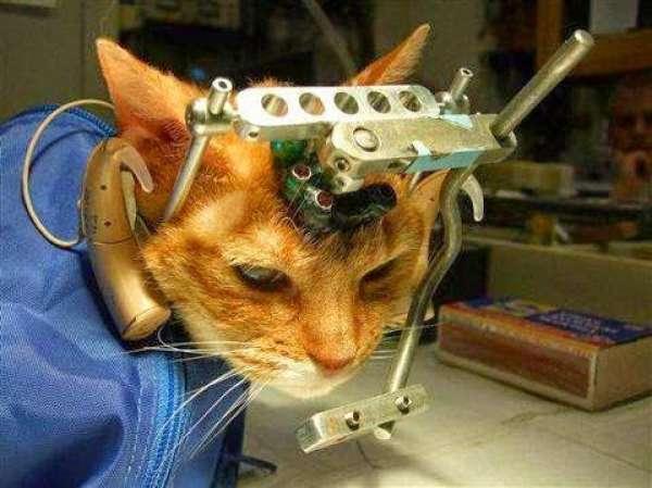 Hayvan Deneyleri Neden Kabul Edilemez?