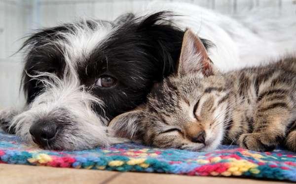 Kedi ve Köpeklerde Yaşlılık