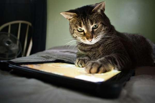 Kedilerle Oynanabilir Oyunlar