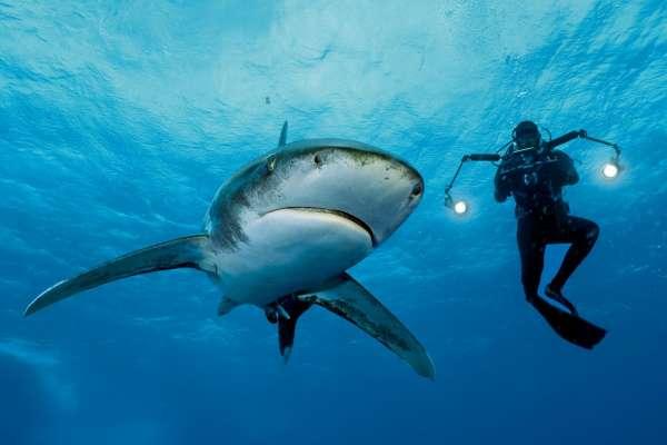 Klasik Film Teması: Köpek Balığı Filmleri