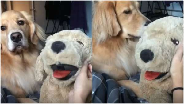Köpeğiniz Kıskançlık Mı Yapıyor?