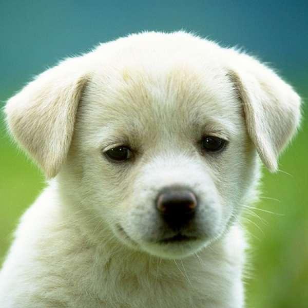 Köpeklerde Görülen Tehlikeli Hastalıklar