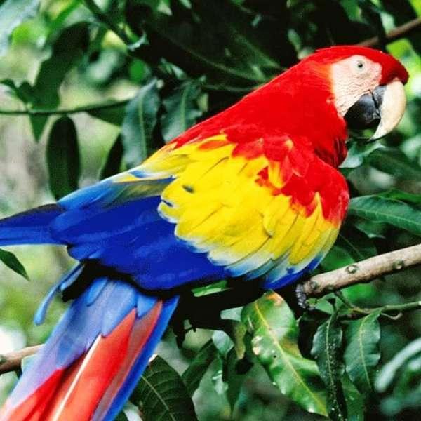 Papağan Almayı Düşünenlere Tavsiyeler