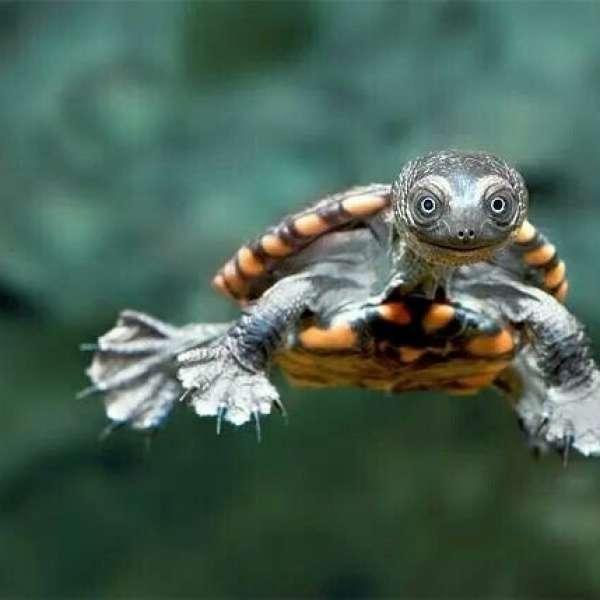 Su Kaplumbağaları Hastalanır Mı?