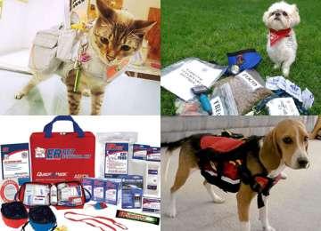 Evcil Hayvanlarda İlk Yardım