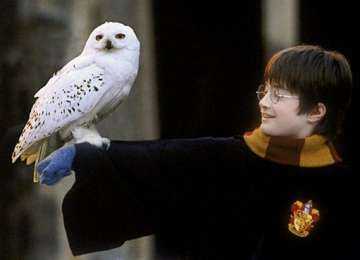 Harry Potter Dünyası'nın Büyüsüz Hayvanları