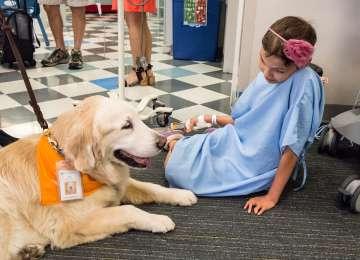 Hayvan Destekli Tedavi Hakkında Bilinmesi Gerekenler
