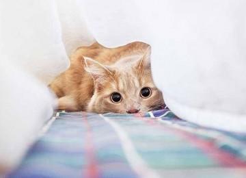 Kedi Davranışları Ne Anlama Gelir?