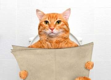 Kedi İdrarı Kokusu Nasıl Giderilir?