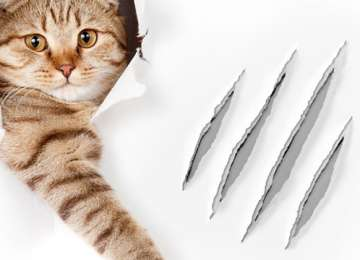 Kedi Isırması ve İlk Yardım