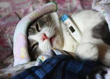 Kedi Sahiplerinin Korkulu Rüyası: Kedi Nezlesi
