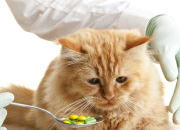 Kedi Ve Köpeklere Nasıl İlaç Verebiliriz?