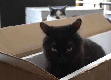 Kediler Kıskanır Mı?