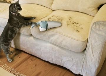 Kediler Neden Tüy Döker? Önlemek Mümkün Müdür?