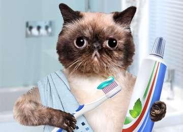Kedilerde Ağız Kokusunun Nedenleri ve Çözüm Yolları