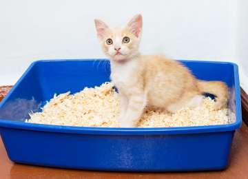 Kedilerde Kabızlık Sebepleri ve Tedavi Yöntemleri