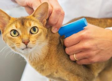 Kedilerde Parazit ve Tedavi Yöntemleri