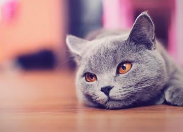Kedilerden Bulaşabilecek Hastalıklar Var Mı?