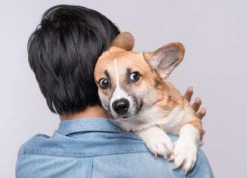 Köpeklerde Panik Atak Görülebilir Mi?