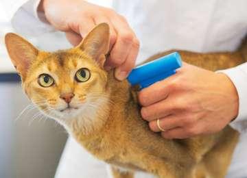 Minik Dostlarımızın Baş Belası; Kedilerde Bağırsak Kurdu
