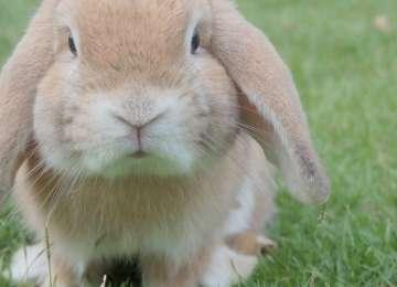 ''Naber cınıım'' Bu Yazı Evde Tavşan Besleyenlere Gelsin!