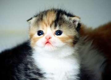 Yavru Kedi Bakımı Hakkında Bilinmesi Gerekenler