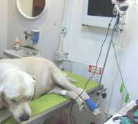 nova-veteriner-klinigi-621