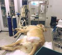 terapi-veteriner-klinigi-660