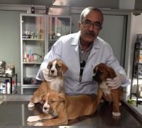 20227-onur-veteriner-klinigi-192