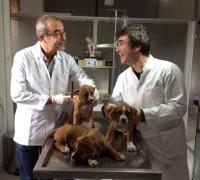 20229-onur-veteriner-klinigi-54