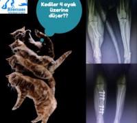 20294-ronesans-veteriner-klinigi-653