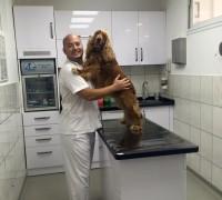 20295-ronesans-veteriner-klinigi-92
