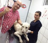 20297-ronesans-veteriner-klinigi-762