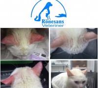 20298-ronesans-veteriner-klinigi-572