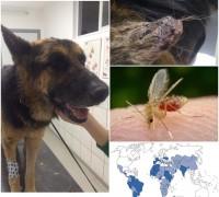 20299-ronesans-veteriner-klinigi-844