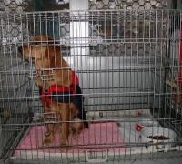 20426-ozoner-veteriner-klinigi-701