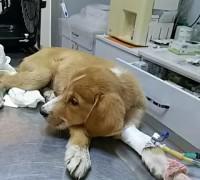 20432-egem-veteriner-klinigi-39