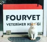 fourvet-veteriner-klinigi-100