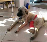 fourvet-veteriner-klinigi-869