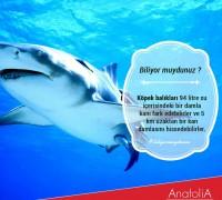 20472-anatolia-hayvan-hastanesi-649