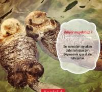 20475-anatolia-hayvan-hastanesi-669