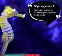 20477-anatolia-hayvan-hastanesi-192
