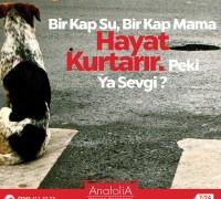 20478-anatolia-hayvan-hastanesi-974