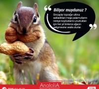 20479-anatolia-hayvan-hastanesi-250