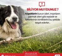 20481-anatolia-hayvan-hastanesi-892