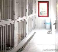 vetclinic-veteriner-klinigi-889