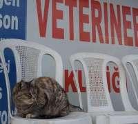 atakent-veteriner-klinigi-639