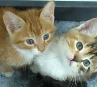 20523-kosuyolu-pet-veteriner-klinigi-491