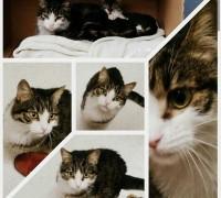 20527-kosuyolu-pet-veteriner-klinigi-883
